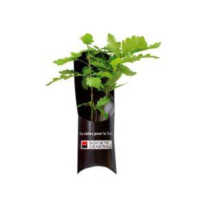 cadeau-pub-ecologique-arbre-a-planter