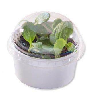 3 kits de plantation dans pots personnalisable avec mini-serres - Fermé