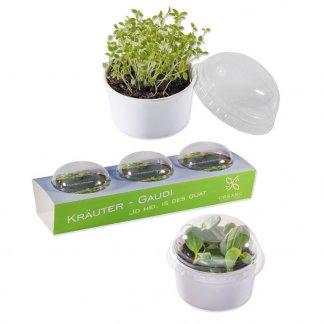 3 kits de plantation dans pots promotionnels avec mini-serres