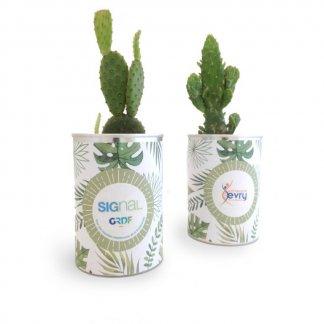 Cactus ou plante dans boite de conserve publicitaire - CANETTE A PLANTE