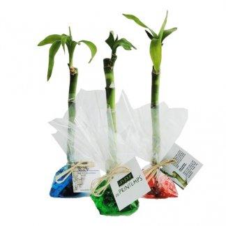 Canne chinoise dans papier fleuriste personnalisé - INDIVIDUELLE