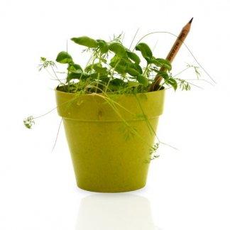 Crayon à planter personnalisé en bois certifié - Dans pot - SPROUT
