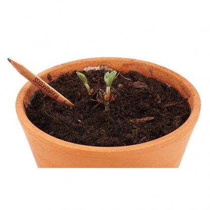 Crayon à Planter Publicitaire En Bois Certifié Dans Pot SPROUT
