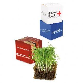 Cube de cresson dans boite en carton personnalisée - COCO-CUBE