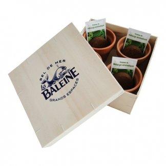 Kit de culture aromatique dans coffret en bois personnalisé - COFFRET AROMATIQUES BOIS
