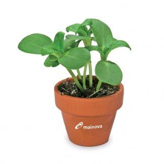 Kit de plantation dans pot en terre cuite avec pochette carton personnalisable - Pot marqué