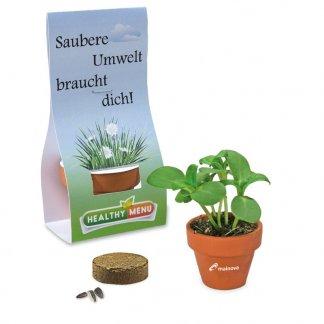 Kit de plantation dans pot en terre cuite avec pochette carton publicitaire