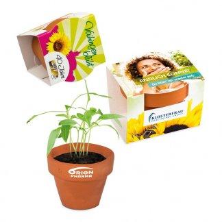 Kit de plantation promotionnel dans mini pot en terre cuite et fourreau