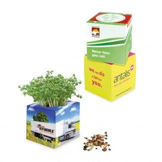 Kit de plantation promotionnel dans pot en polystyrène - CUBE VEGETAL