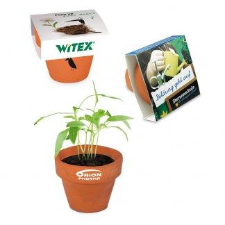 Kit de plantation publicitaire dans mini pot en terre cuite avec fourreau chapeau