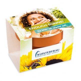Kit de plantation publicitaire dans mini pot en terre cuite et fourreau - Marquage Fourreau Quadri