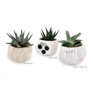 Mini plante dans pot en céramique aimanté - CERAMANT