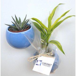 Mini plante dans pot en céramique aimanté publicitaire - bleu - CERAMANT