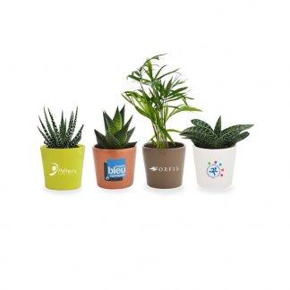 Mini plante dans pot en céramique personnalisable  - toutes couleurs - MINICERA