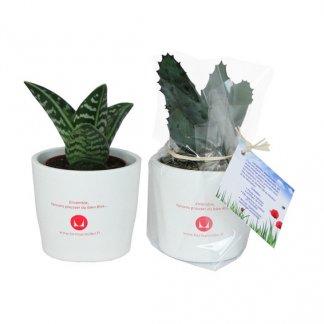Mini plante dans pot en céramique personnalisé - Marquage pot 1 couleur - MINICERA
