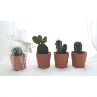Mini plante dans pot en terre cuite publicitaire - cactus - MINIPOT