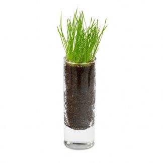 Mini plante dans vase en verre publicitaire - PLANTEVERRE