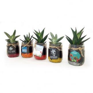 Mini plante dépolluante dans bocal rétro en verre promotionnel - BOCAUX DE PLANTES