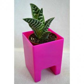 Mini plante ou mini arbre dans pot publicitaire spécial écran ordinateur - LE POT'ORDI
