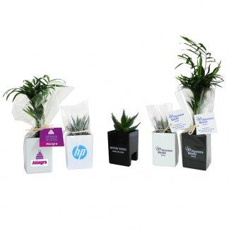 Mini plante ou mini arbre dans pot spécial écran ordinateur personnalisé - Blanc et noir - LE POT'ORDI