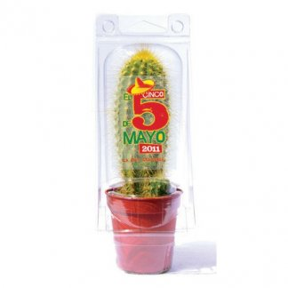 Mini serre publicitaire pour cactus en bouteilles plastiques recyclées - PROTEC