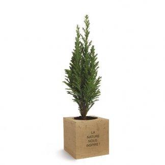 Plan d'arbre dans cube en bois publicitaire - Sapin - ARBRACUBE