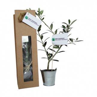 Plan d'arbre dans sac kraft personnalisé - SACARBRE