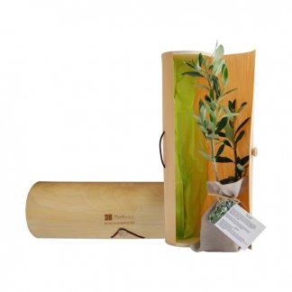 Plan d'arbre dans tube en bois personnalisé - TUBARBRE