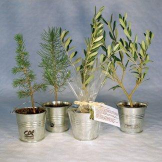Plan d'arbre en pot zinc publicitaire - POTZINC
