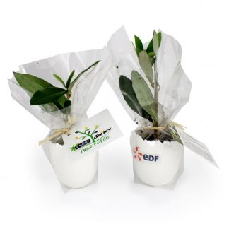 Plan d'arbre personnalisé dans pot en forme d'œuf - Emballé - L'ŒUF