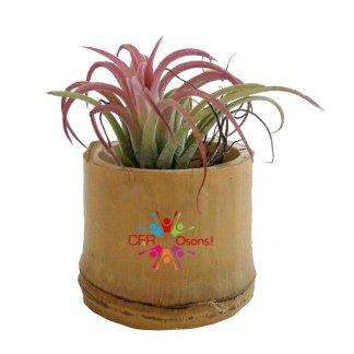 Plante dépolluante sans entretien dans pot en bambou publicitaire - avec adhésif quadri - TILLANDSIA