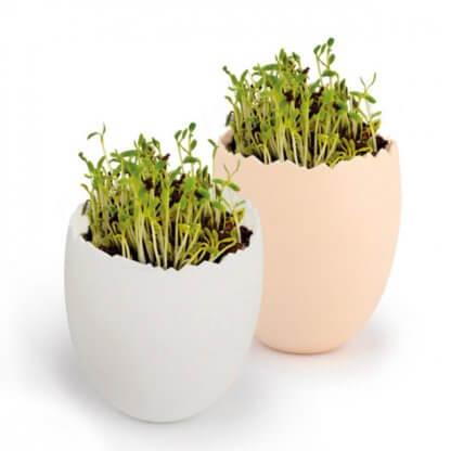Kit De Plantation Avec Pot Recyclé En Forme D'œuf KIT OEUF 2 Couleurs