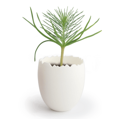 Kit De Plantation Avec Pot Recyclé En Forme D'œuf KIT OEUF Pousse