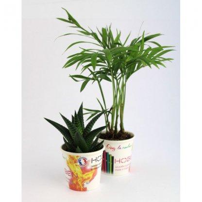 Mini Plante Dépolluante Dans Pot En Carton POTPLANTE Avec Marquage