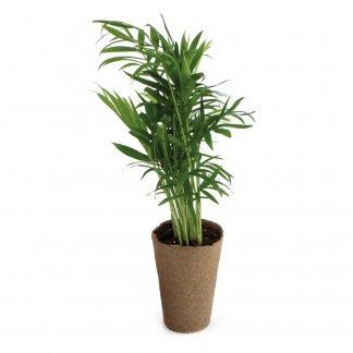 Plante Dépolluante Dans Pot Tourbe Personnalisable 100% ECOLO