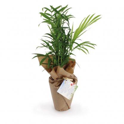 Plante Dépolluante Dans Pot Tourbe 100% ECOLO Dans Sac